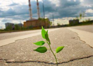 permiso ambiental